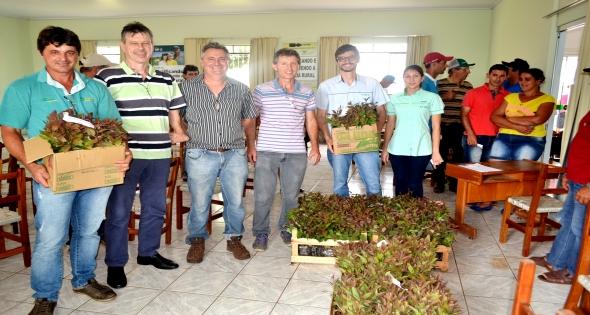Entrega técnica de 10 mil mudas de eucaliptos em Matelândia