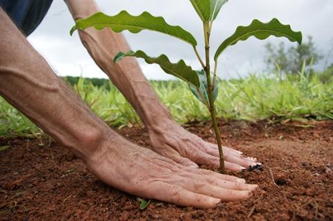 Secretaria de Meio Ambiente Planeja Plantio de Árvores Nativas